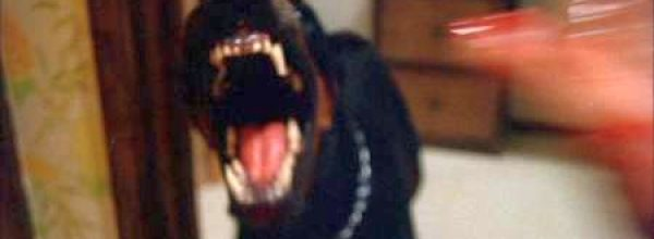 DOGS – QUESTO CANE UCCIDE!